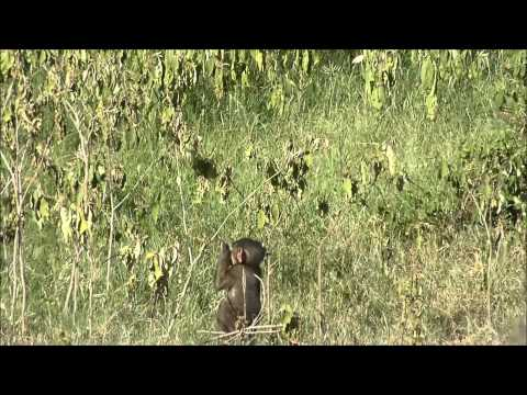 Safari Kenya Jun14