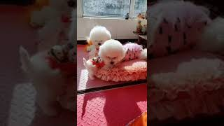 Look at these cute and funny puppies dogs 1653
