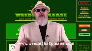 Medical Marijuana Seeds | Pipes, Bongs, Vaporizers & More