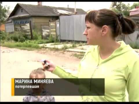 Бойцовая собака терроризирует жителей Ярославля