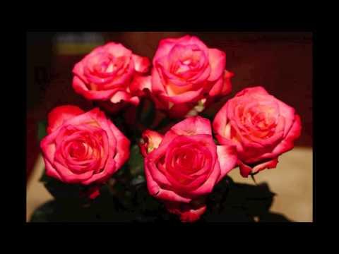 Adi Smolar - Dalec Je Za Naju Pomlad