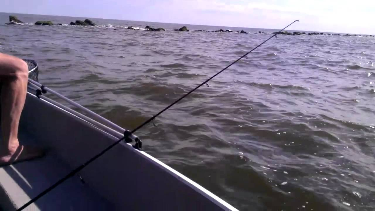 Red drum fishing winyah bay ocean jetties sc youtube for Mobile bay fishing report