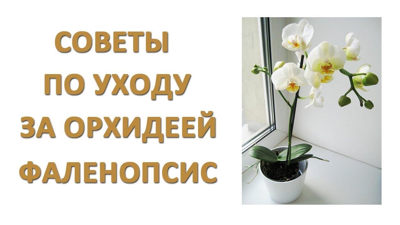 Как ухаживать за орхидеями в домашних условиях  468