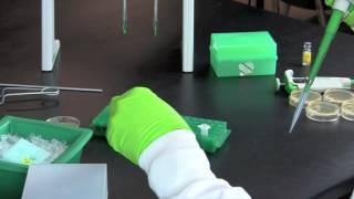 Setting Up and Running Mini-PROTEAN® TGX™ Precast Gels