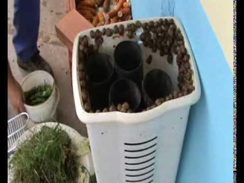 mini criadero casero de caracoles ( experimental )  1 de 2