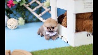 Puppy Beauty Teddy Bear puppy ~ 犬の美容クマのぬいぐるみの犬〜
