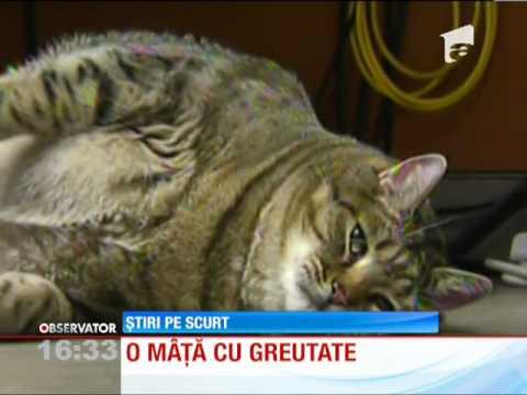 Sua: Pisica Obeza, Abandonata In Strada video