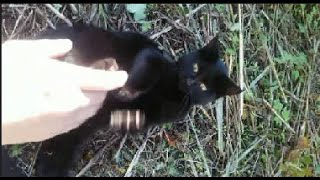 唯一なついてくれる野良のクロネコ - The only stray black cat which is attached to me.