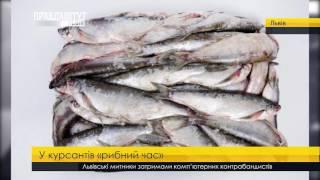 Тендер на закупівлю риби до академії. ПравдаТУТ Львів