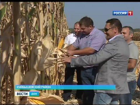 Гигантская кукуруза на Дону — эффективность капельного орошения