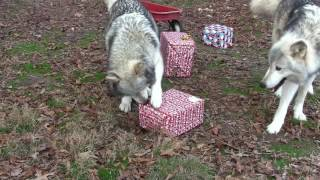 Wolf Howl Pack Christmas 2016