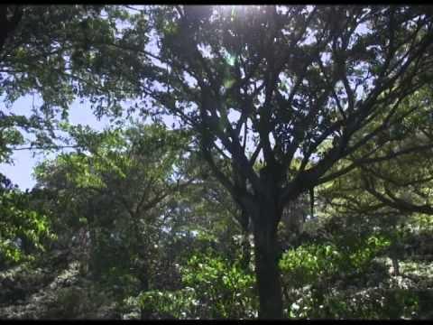 NICATele USA RECORRIENDO EL CRUCERO EN NICARAGUA.