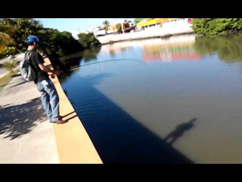 Fly fishing tarpon baby ciudad del carmen