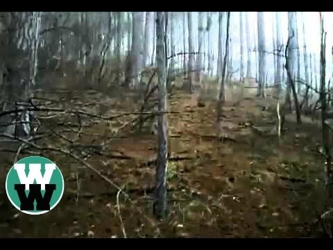 Top 7 Best Bigfoot Sightings of All Time - YouTube | 480 x 360 jpeg 26kB
