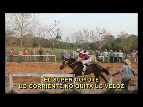 EL CHAPARRO vs EL COYOTE FINAL MATURITY CONVENCIONAL A 250vrs IXTAGAPA, VERACRUZ