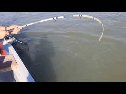 Fishing. Kazakhstan. Рыбалка на белого амура. Балхаш