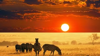 The Best African Chillout Songs Mama Africa Mix