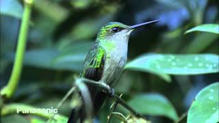 Cilada.com - The Wild Life in Brazil - Vida Selvagem no Brasil HD 1080p.
