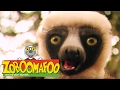 🐒 Zoboomafoo 🐒 131 | Funny Faces - Full Episode | Kids TV Shows