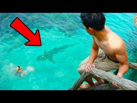10 Смертельно опасных животных которые живут с человеком