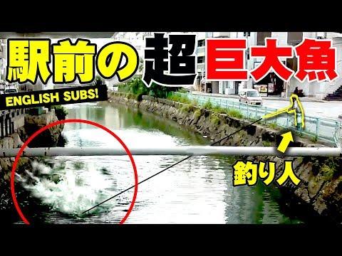 沖縄って街中でGT釣れるの?