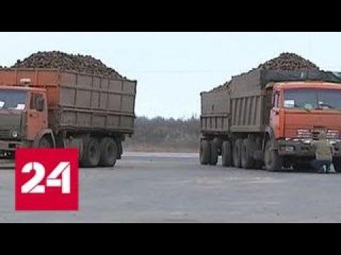 Опасный перегруз: как свекла угрожает машинам и пешеходам - Россия 24