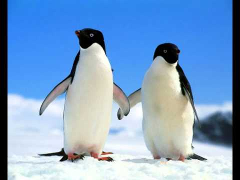 Avicii - Penguin