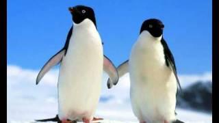 Avicii Video - Avicii - Penguin (Original mix)