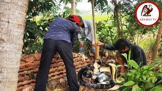 Đào hang bắt rắn: Trong nhà dân phát hiện nguyên Động Rắn Hổ Mang| Săn Bắt TV