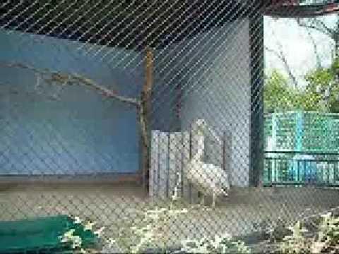 モモイロペリカンのペリーさん@大牟田市動物園・その1