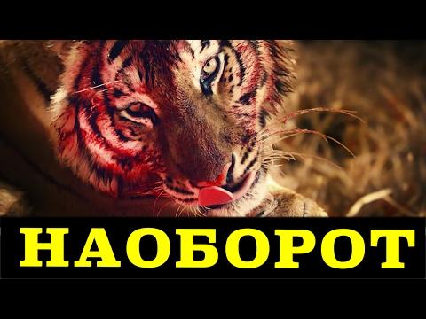 Ленинград — Кольщик (Задом наперед)