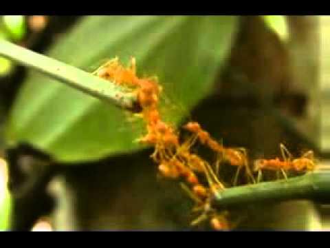 Animal Ant Team Work Youtube