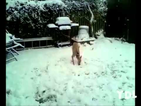 Смешные собаки нарезка