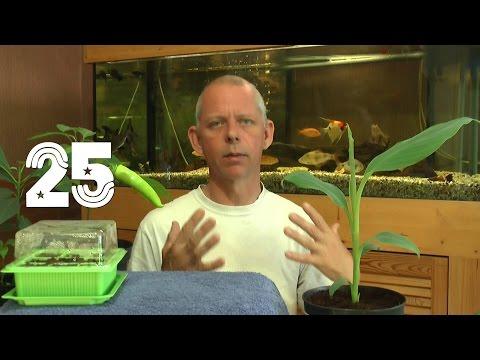 Die Sämlinge Und Wie Geht Es Weiter Mit Den Exoten Und Anderen Pflanzen Teil 25