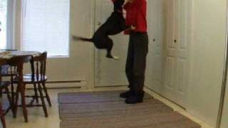 Putting a Dog's Unwanted Behavior on Stimulus Control (to get Rid of it)-Clicker trained Jumping