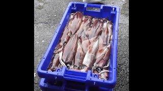 Fishing video, Squid fishing, pesca ás Lulas,, Pêche au calmar, Pesca de calamar, صيد الحبار