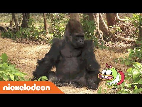 download lagu Breadwinners  Meet A Gorilla  Nick gratis