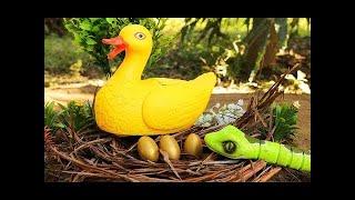 Vịt đẻ trứng & Con rắn đã đánh cắp trứng - Video cho trẻ em Câu cá cho trẻ e