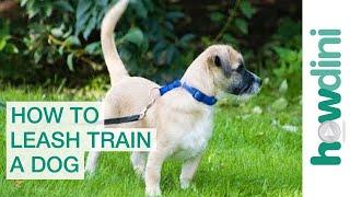 Leash Training a Puppy: How to Leash Train a Puppy or Dog