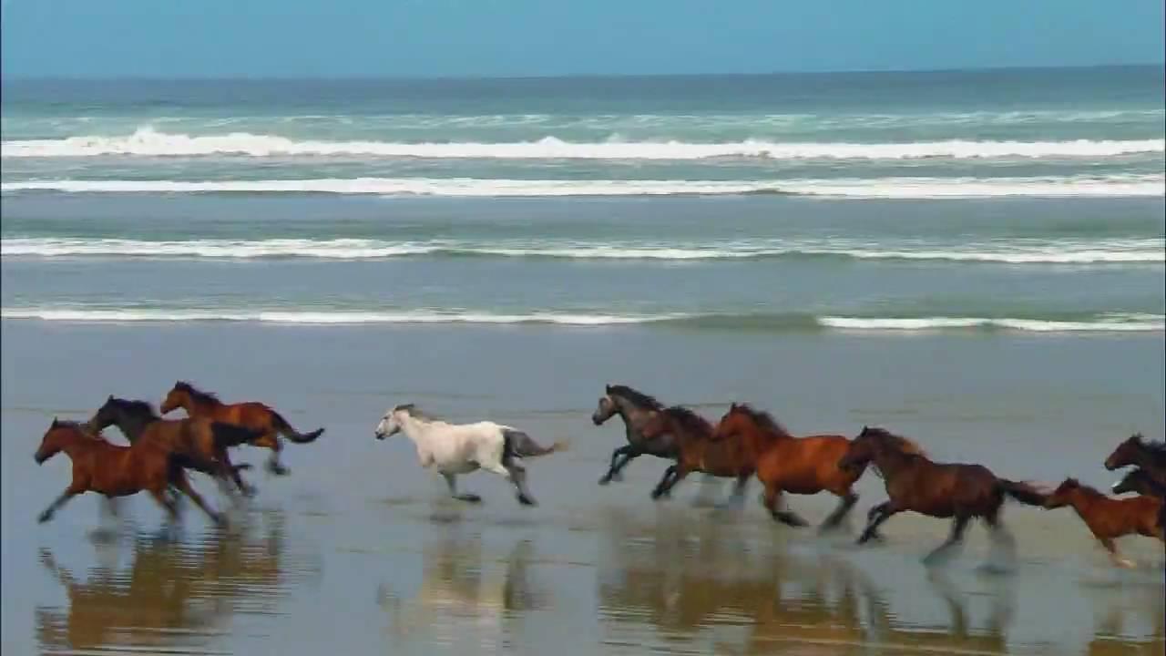 Красивые картинки скачущих лошадей