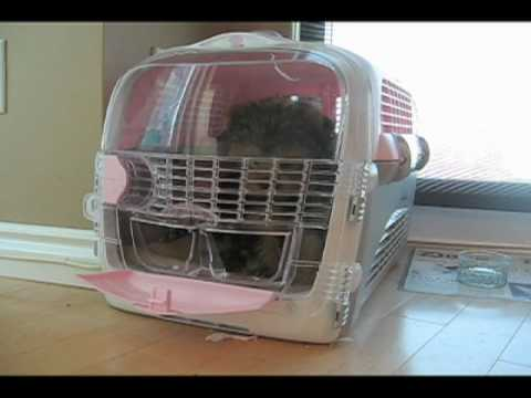 Houdini Puppy Escapes Crate Video