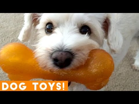 Funniest Dogs and Their Favorite Toys EVER | Funny Pet Videos