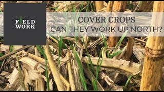 Cover Crops: Can They Work Up North?
