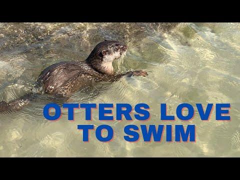 Otter pups loving the sea.