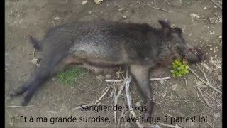 chasse sanglier 2016 - top 10 shoots hunting, battue sanglier - Gros sanglier : 128KG