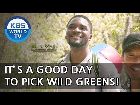 It's a good day to pick wild greens!  [Uncles Gathering Greens/ 2018.05.16]