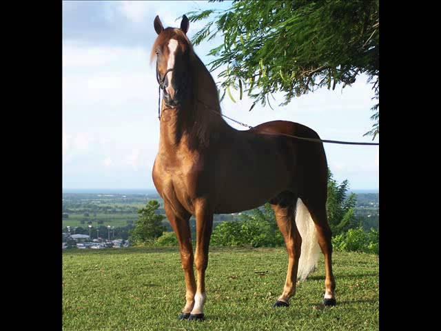 Top de los caballos mas hermosos