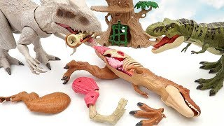 T-Rex VS Indominus! Dinosaur Movie For Kids. Tyrannosaurus Anatomy Set Funny Dinosaur Toys