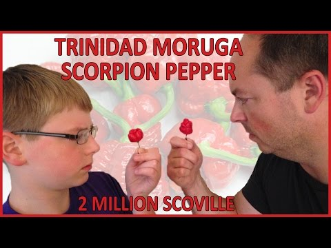 12-yr-old eats whole Trinidad Moruga Scorpion pepper : Hot Pepper Challenge, Crude Brothers