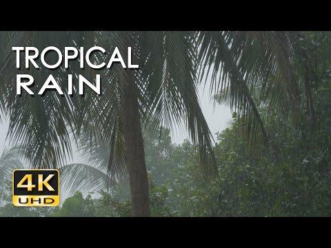 4K Tropical Rain & Relaxing Nature Sounds - Ultra HD Nature Video - Sleep/ Relax/ Study/ Meditate